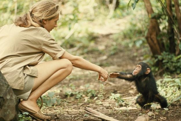 Um momento tocante, capturado pela N.G. em 1954, numa reserva natural da Tânzania