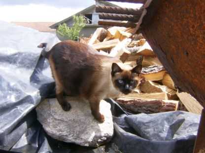 Fofa, uma das minhas gatas